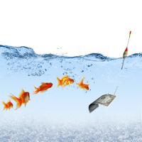 Goldfische folgen Dollar an Angel